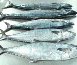 M.U. Sea Foods Ltd.   Jessore