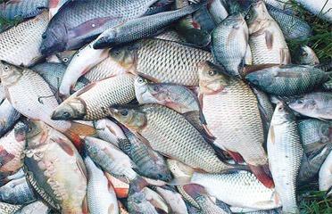 Bionic Fish Processing Ltd