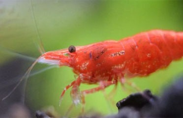 International Shrimps Export (Pvt.) Ltd.   Khulna