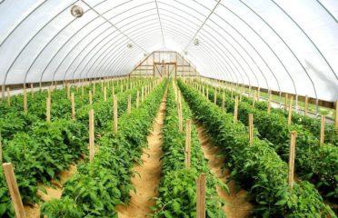 Nijampur Agro Products Ltd. | Chittagong