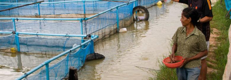 Hatim Aquaculture Technologies Fish Farm