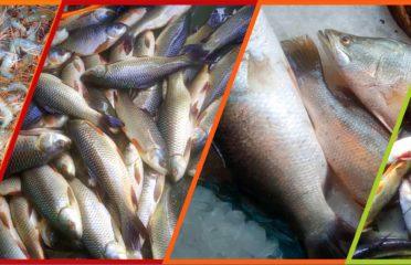 Bagerhat Fish