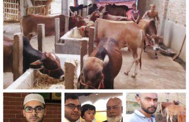 Salam Organic Cow & Dairy Farm
